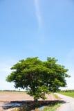 вал риса поля Стоковые Фото
