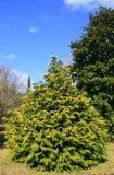 вал сада Стоковая Фотография