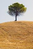 вал сельской местности apulia Стоковая Фотография