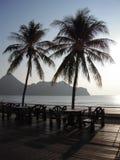 вал силуэта ладони кокоса Стоковые Изображения RF