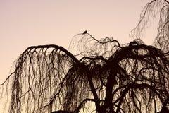 вал силуэта птицы Стоковое Изображение RF