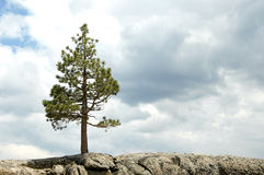 вал скалы Стоковое Фото