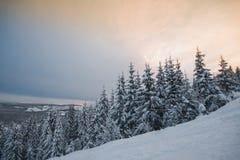 вал снежка ели вниз стоковые фото