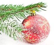 вал снежка ели Стоковые Фотографии RF