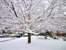 вал снежка района Стоковая Фотография RF