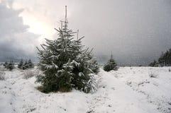 вал снежка рождества Стоковые Изображения