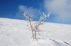 вал снежка цветка Стоковое Изображение