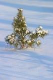 вал снежка шерсти Стоковые Изображения RF