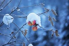 вал снежка яблок Стоковое Фото