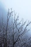 вал снежка Стоковые Изображения RF