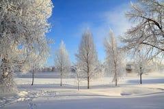 вал снежка Стоковое Изображение
