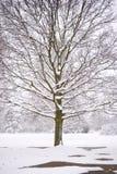 вал снежка Стоковое Фото