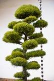 вал сосенки колоколов японский Стоковая Фотография