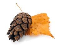 вал сосенки листьев конуса Стоковые Изображения RF