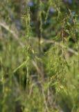 вал сосенки озера baikal предпосылки стоковое фото rf