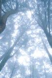 вал сосенки пущи тумана Стоковая Фотография RF