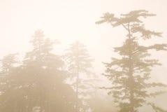 вал сосенки пущи тумана Стоковое Изображение RF