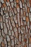 вал сосенки расшивы Стоковая Фотография