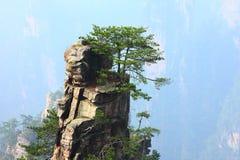 вал сосенки скалы Стоковое Изображение