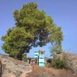 Вал сосенки с крапивницами Стоковое фото RF