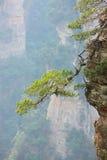 вал сосенки Стоковые Фото