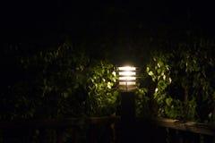 вал столба освещения светильника березы Стоковое Изображение RF