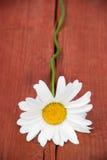 вал стоцвета Стоковые Фотографии RF