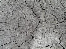вал текстуры пня Стоковая Фотография RF