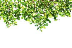 вал текстуры разрешения предпосылки зеленый изолированный Стоковая Фотография