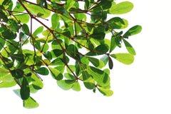 вал текстуры разрешения предпосылки зеленый изолированный Стоковые Фото