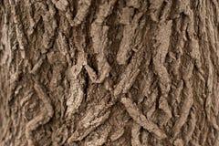 вал текстуры расшивы предпосылки Снимите кожу с расшивы дерева тот трескать трассировок стоковая фотография rf