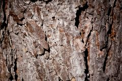 вал текстуры сосенки Стоковые Фотографии RF