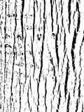 вал текстуры тополя расшивы старый Деревянная предпосылка для графического дизайна Стоковые Фото