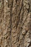 вал текстуры Стоковые Фотографии RF