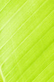 вал текстуры Стоковые Фото
