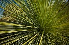 вал травы стоковое изображение rf