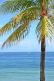 вал тропический Стоковое фото RF