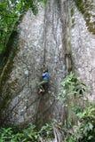 вал тропический Стоковая Фотография RF