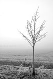 вал тумана одиночный Стоковое фото RF
