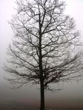 вал тумана уединённый стоковые изображения rf