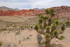 вал утеса joshua каньона красный Стоковые Фотографии RF