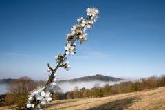 вал утра цветения туманный Стоковое Изображение