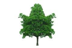 Вал формы кленового листа Стоковое Изображение