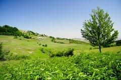 вал холма Стоковое Изображение RF