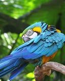 вал цветастого macaw сидя стоковое изображение