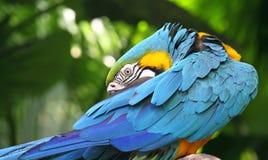 вал цветастого macaw сидя стоковое изображение rf