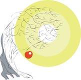 вал цвета 02 яблок Стоковое Изображение RF