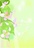 вал цветения яблока иллюстрация вектора