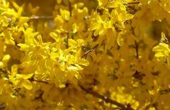 вал цветения Стоковое Изображение