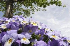 вал цветка Стоковое Фото